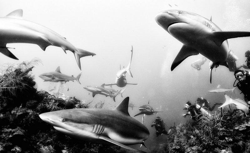Жизнь под водой от фотографа Ануара Патьяне - №18