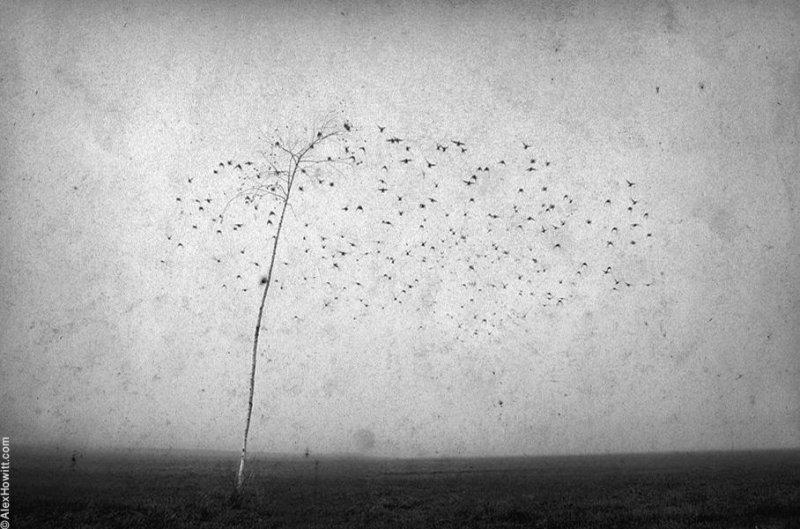 Художественные фотографии Алекса Хоуита - №1