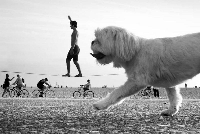 Фотограф Мойзес Леви - №4