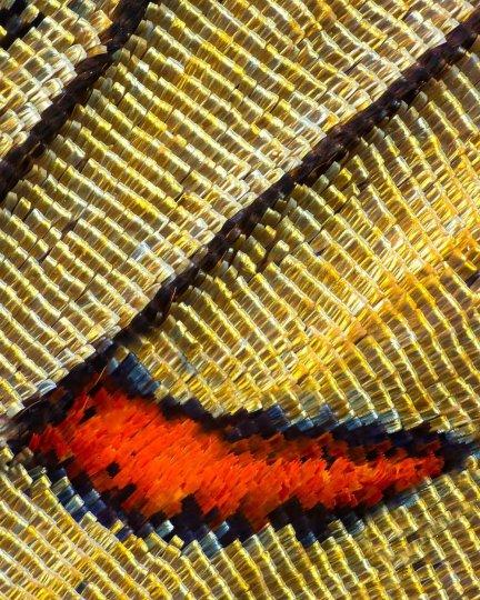 «Крылья бабочек». Фотограф Крис Перани - №4