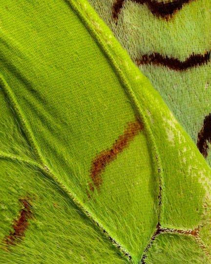 «Крылья бабочек». Фотограф Крис Перани - №8