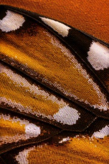 «Крылья бабочек». Фотограф Крис Перани - №16