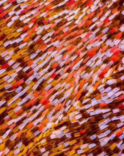 «Крылья бабочек». Фотограф Крис Перани - №11