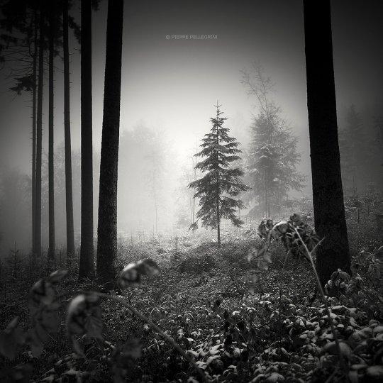 Пейзажные фотографии Пьера Пеллегрини - №20