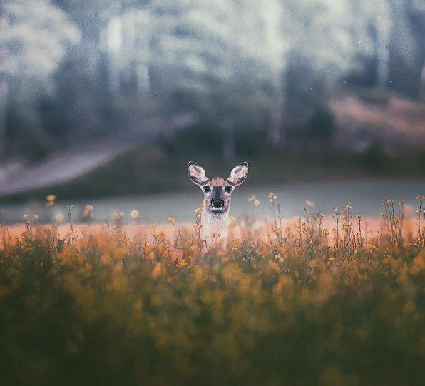 Фотограф Конста Пункка - №1