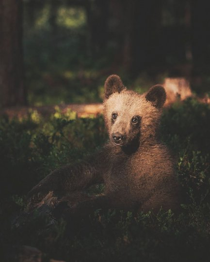 Фотограф Конста Пункка - №12