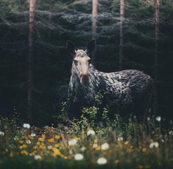 Фотограф Конста Пункка - №8