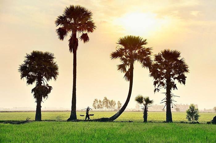Вдохновляющие работы фотографа Ли Хоанг Лонга - №10