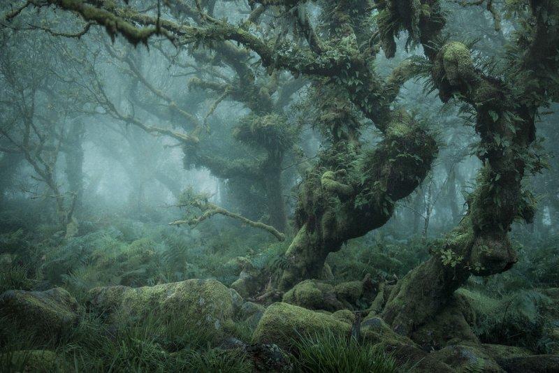 Туманный лес в фотографиях Нила Бернелла - №2