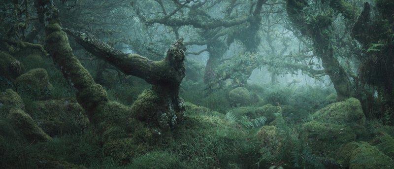 Туманный лес в фотографиях Нила Бернелла - №4