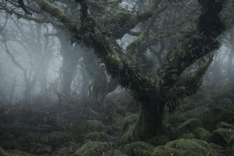 Туманный лес в фотографиях Нила Бернелла - №5