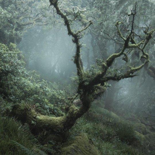 Туманный лес в фотографиях Нила Бернелла - №8