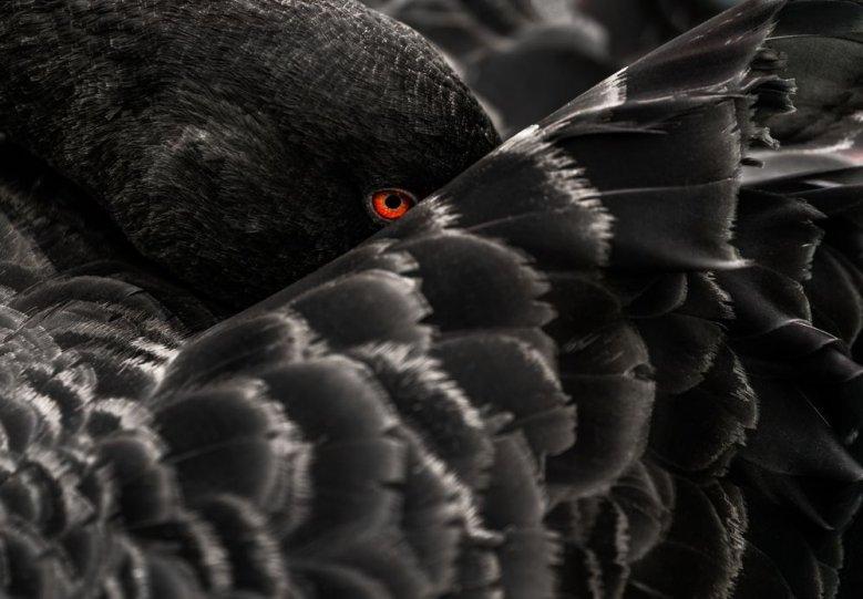 Автор фото: Иштван Ладаньи