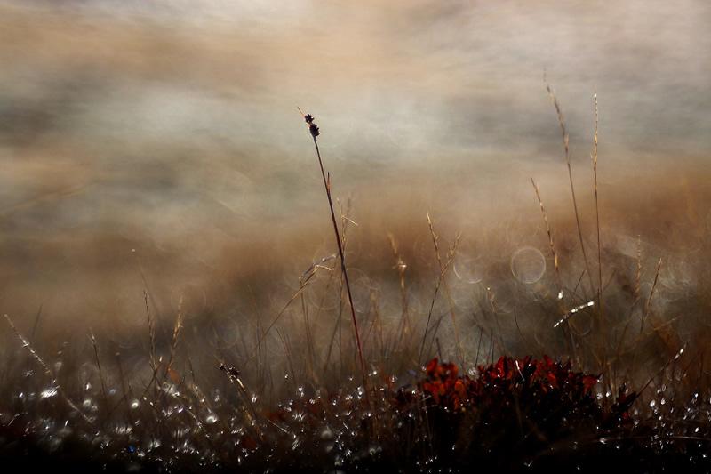 Фотограф Peter da Palmer - №6