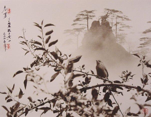 Фотограф Don Hong-Oai - №8