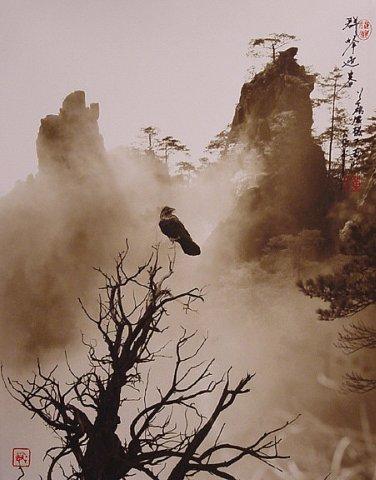 Фотограф Don Hong-Oai - №32