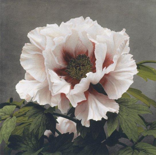Японские цветы Огавы Кадзумасы - №2
