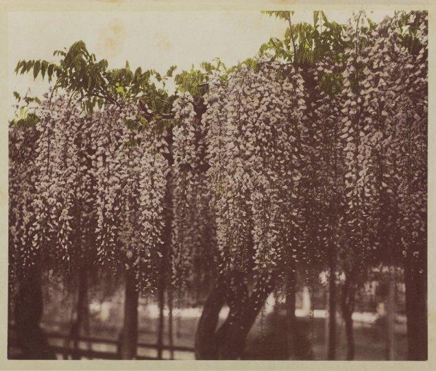 Японские цветы Огавы Кадзумасы - №6