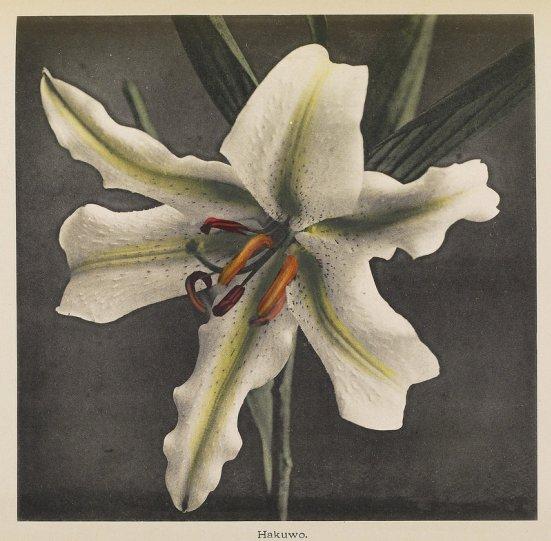 Японские цветы Огавы Кадзумасы - №12