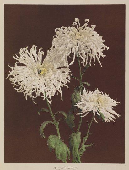 Японские цветы Огавы Кадзумасы - №20