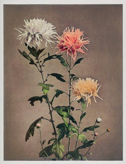 Японские цветы Огавы Кадзумасы - №26