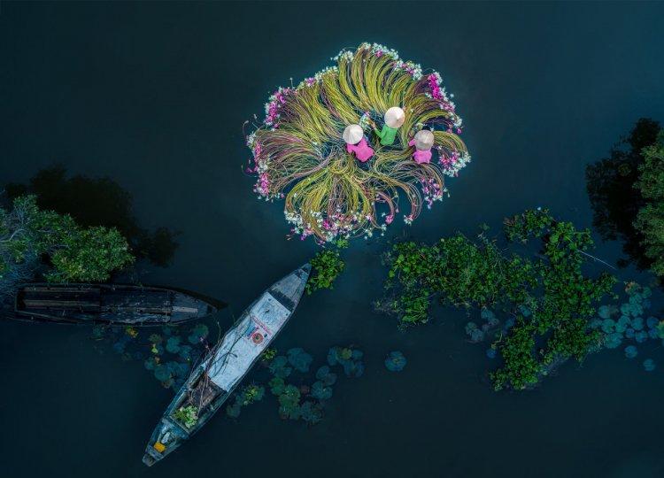 1 место. Цветы на воде. Автор фото: Хан Фан.