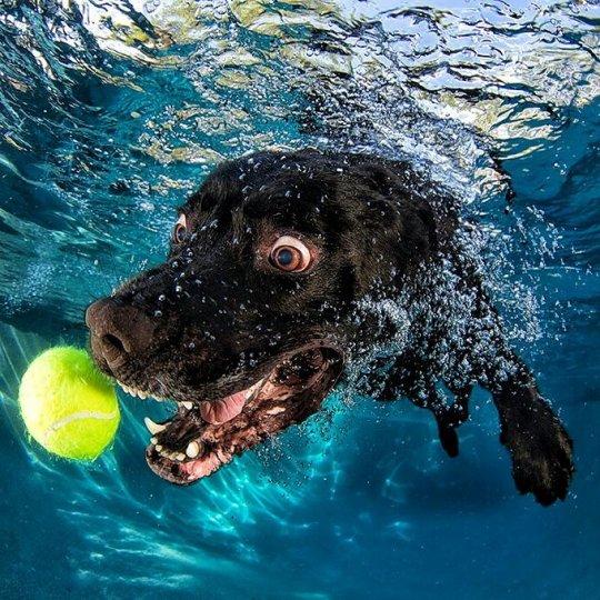 """Фотопроект """"Собаки под водой"""" - №2"""