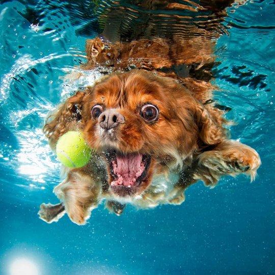 """Фотопроект """"Собаки под водой"""" - №4"""