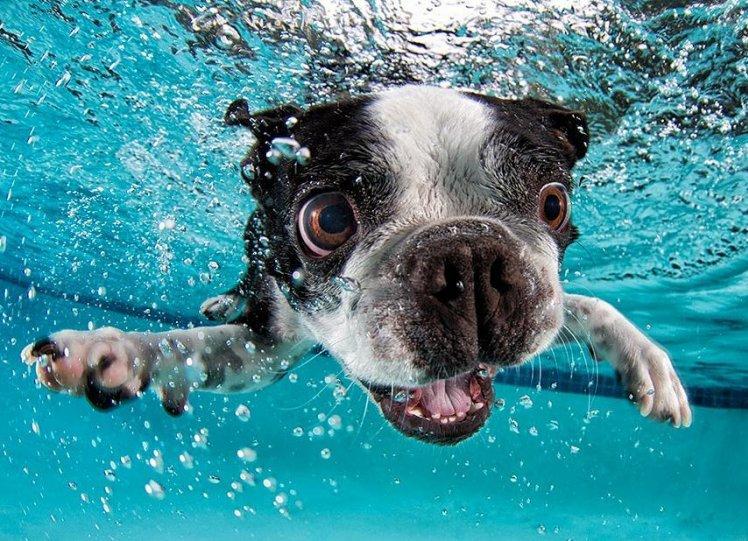 """Фотопроект """"Собаки под водой"""" - №6"""