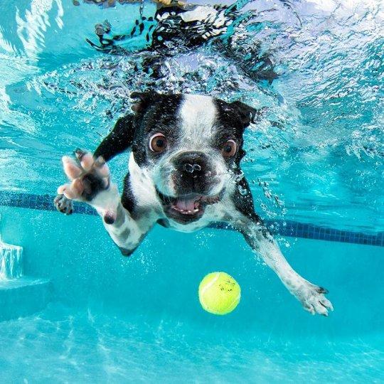 """Фотопроект """"Собаки под водой"""" - №8"""