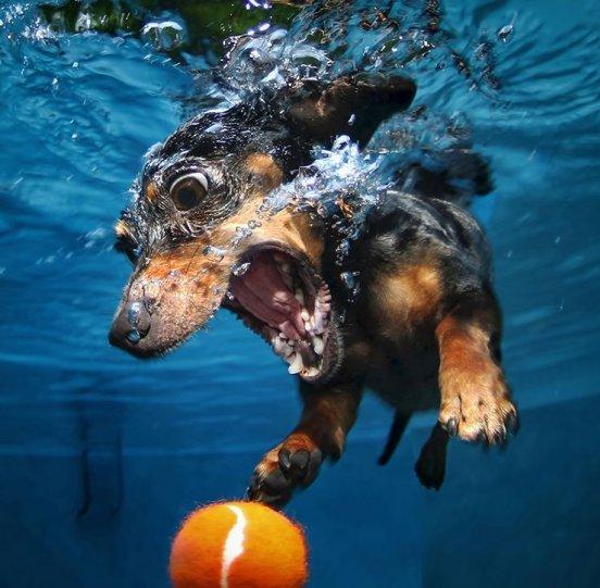 """Фотопроект """"Собаки под водой"""" - №10"""