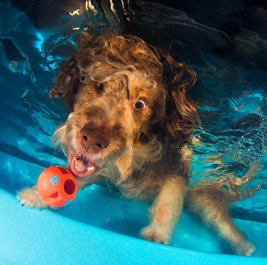 """Фотопроект """"Собаки под водой"""" - №12"""