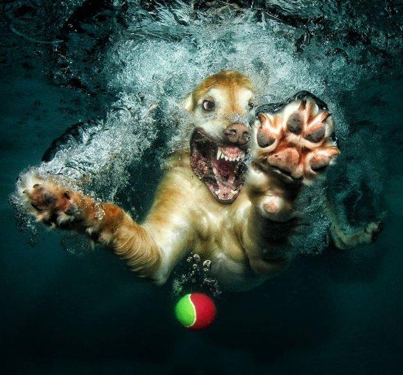 """Фотопроект """"Собаки под водой"""" - №16"""