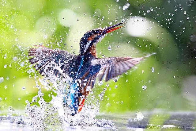 Решающий момент в съемке птиц - №5