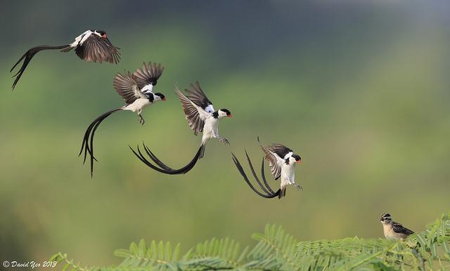 Решающий момент в съемке птиц - №2