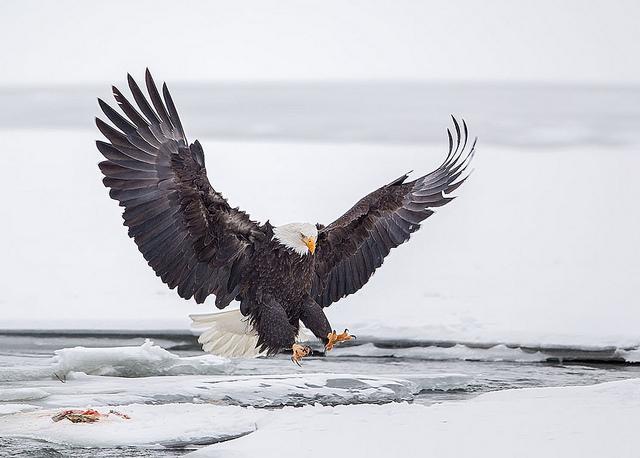 Решающий момент в съемке птиц - №7