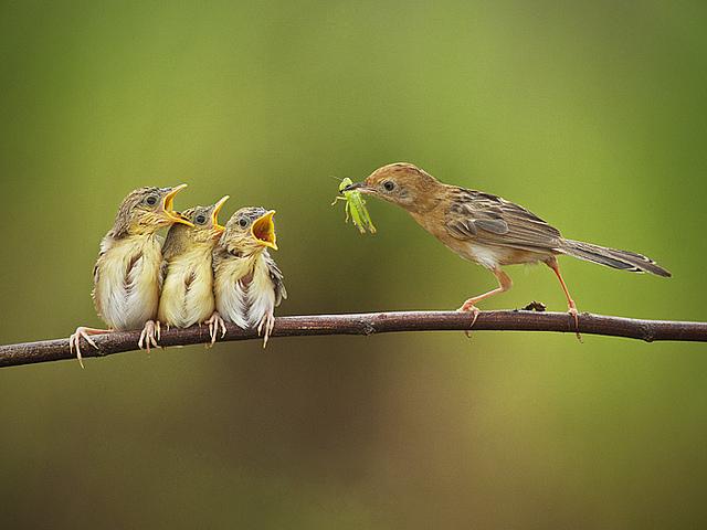 Решающий момент в съемке птиц - №11