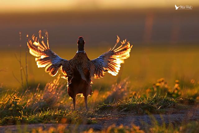 Решающий момент в съемке птиц - №15
