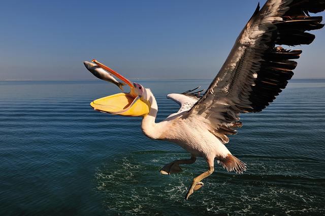 Решающий момент в съемке птиц - №13