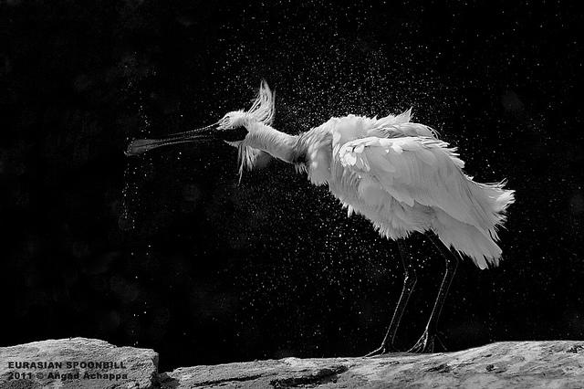 Решающий момент в съемке птиц - №17