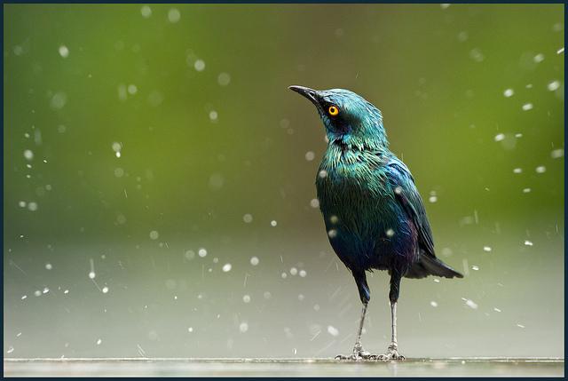 Решающий момент в съемке птиц - №20