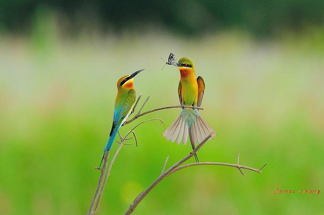 Решающий момент в съемке птиц - №14