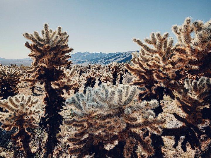 1 место в «Растительной» категории Автор фото: Дэн Лю. Снято на iPhone XS Max