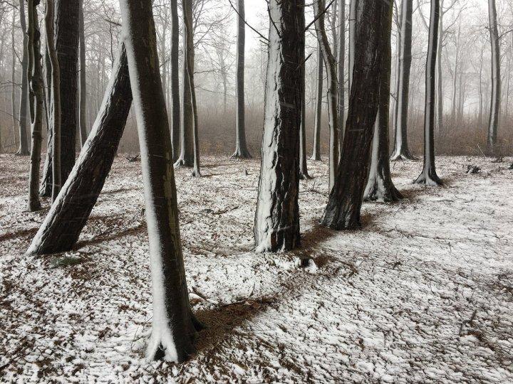 1 место в категории «Деревья» Автор фото: Кристиан Хелвиг. Снято на iPhone 6S.