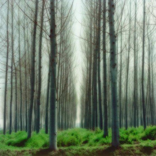 Пейзажи из снов Линн Гизаман - №12