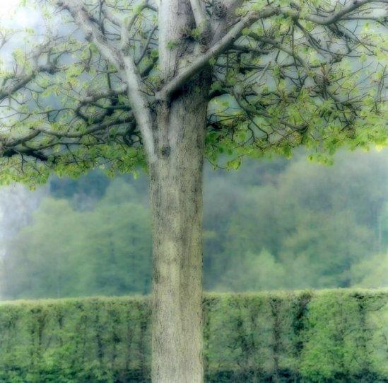 Пейзажи из снов Линн Гизаман - №14