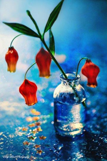 Экстраординарные фотографии цветов - №16