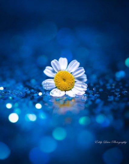 Экстраординарные фотографии цветов - №15