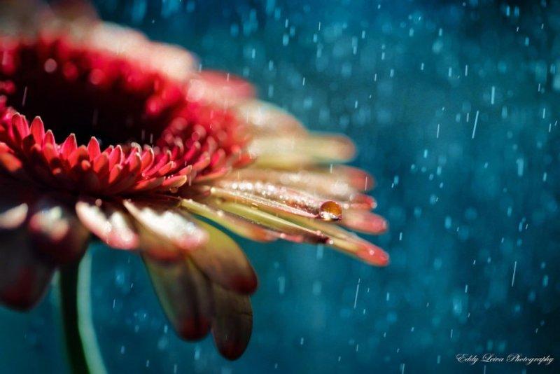 Экстраординарные фотографии цветов - №10