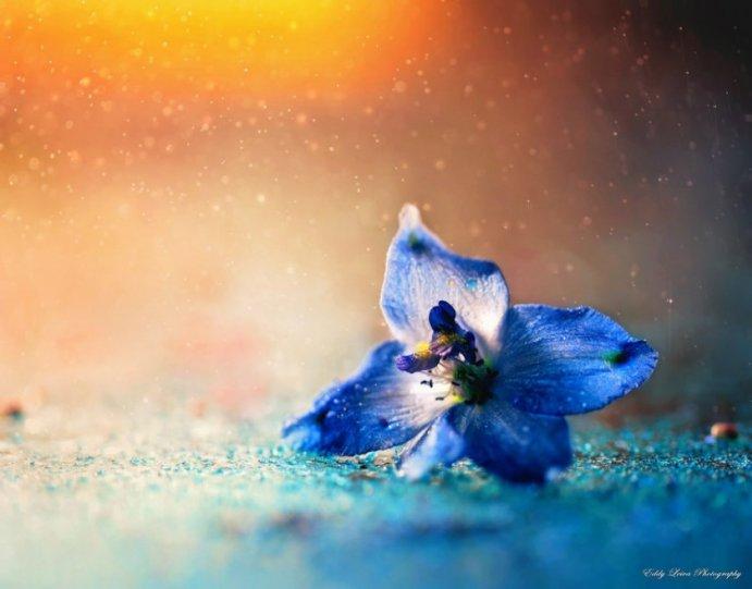 Экстраординарные фотографии цветов - №8